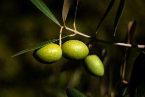 olives-1955275_1920