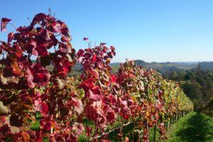 vines-2140920_1920